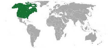 worldmap-northamerica 2.jpg